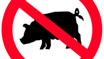 Why Pork is Haram (not permissible) in Islam & 15 Things You Should Know About Pigs